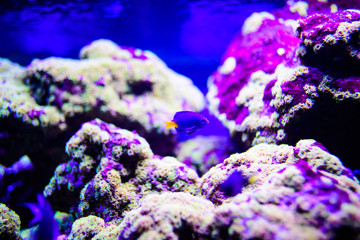 Spoed Foto op Canvas Koraalriffen Wonderful and beautiful underwater world with corals and tropical fish.