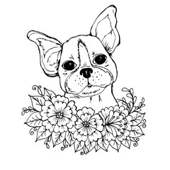 Doodle a face of a cute bulldog in the colors