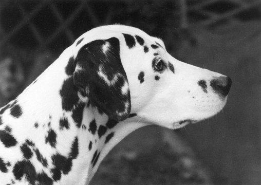 Fall Crufts Winner 1968