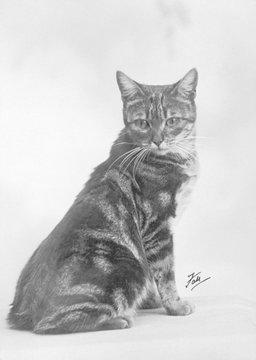 Fall Manx Cat 1936
