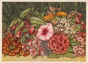 Autumn Flowers 1866