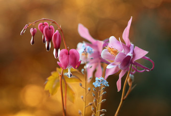 Leinwandbilder - Wiosenne kwiaty