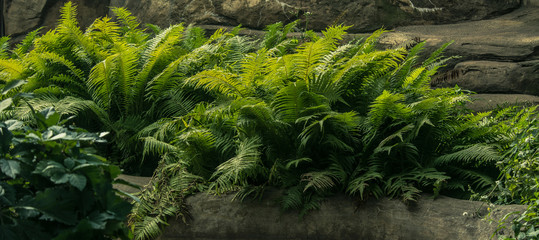 fern on the rocks