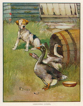 Dog and Geese