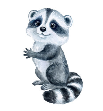 Cute Raccoon cartoon isolated on white background. Watercolor. Illustration. Template. Hand drawing. Clipart. Close-up. Hand painted