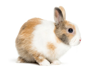 Rabbit in front of white background