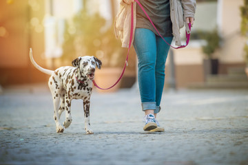 Walk with dog in the village