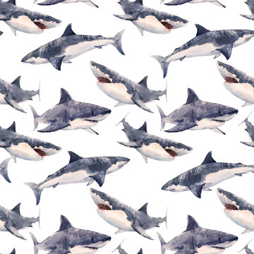 Watercolor shark pattern