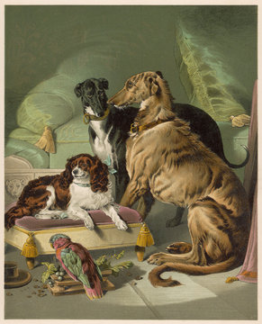 Victorias Dogs