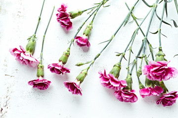 Pink dianthus flowers on white wooden background. Flat lay