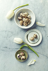 Quails eggs and white tulips on stone background. Flat lay. Spring and Easter concept