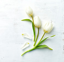 White spring tulips on painted wooden background. Flat lay. Copy space