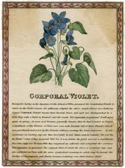 Corporal Violet