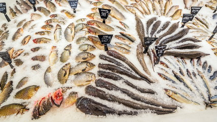 a large selection of fresh fish lying in the ice on the counter of the supermarket.