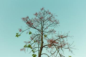 Dry tree on a sky background at Bangkok Thailand.