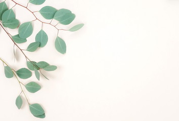 green eucalyptus branches herbs, leaves,  plants frame border on pastel color  background top view....