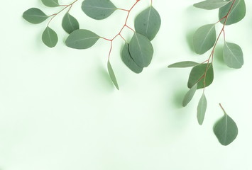 Aluminium Prints India green eucalyptus branches herbs, leaves, plants frame border on pastel color background top view. copy space. flat lay