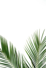 tropical green palm branches leaves pattern frame on a white background. top view.copy space.abstract.