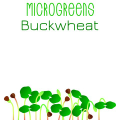 Microgreens Buckwheat. Seed packaging design. Sprouting seeds of a plant
