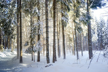 sun shining  through forest