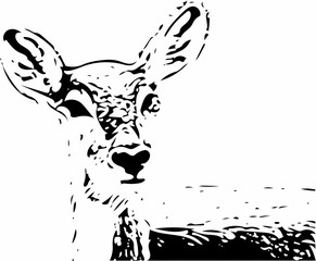 Ornate image of an animal in two colors optics