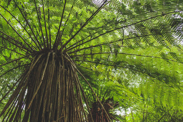 Low angle view of tree fern in rainforest in New Zealand, South Island