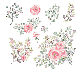Roses. Watercolor illustration.  Botanical collection. Set of wild and garden herbs. Flowers, leaves, branches and other natural elements. Bouquets of pink roses.
