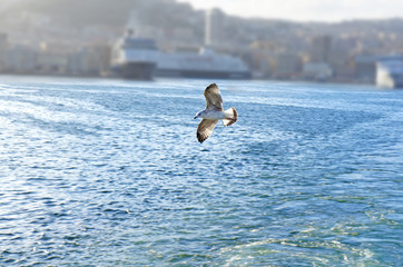 Flying seagull on the background of the sea and ships in the port