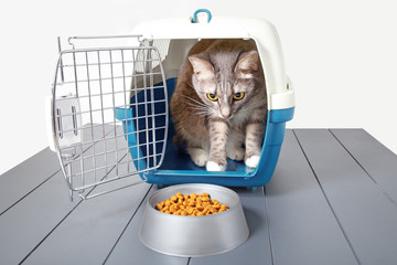 Cat eating dry food from a carrier isolated on white