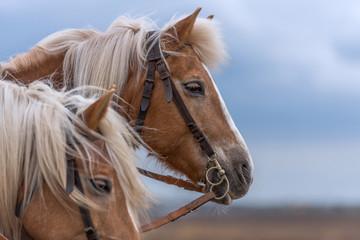 Pferdeportrait bei Tageslicht