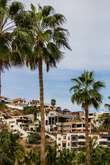 Exotic palm trees and blurred mexican resorts in the backgroud.