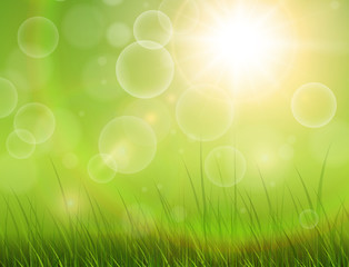 Green nature background, sunny with grass as spring vector background.