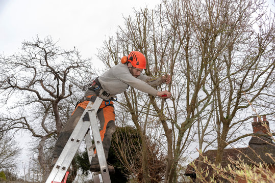 Micheldever, Winchester, Hampshire, England, UK. March 2019. Tree surgeon trimming a tree from a ladder.