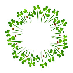 Microgreens Chinese Cabbage. Arranged in a circle. White background