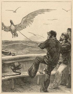 They Capture a Huge Albatross