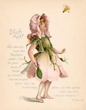 Blush Rose language of Flowers