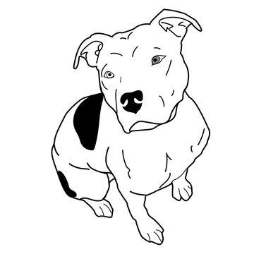 Pitbull/American Staffordshire Terrier Floppy Ears Sitting SVG JPG PNG AI EPS