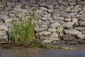 Ufergras an einer Steinmole an der Elbe
