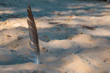 Eine Vogelfeder steckt im Sand