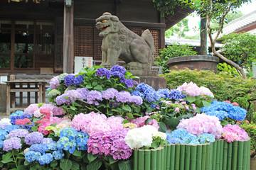 あじさい祭り 白山神社