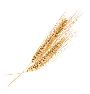 rye isolated on a white without shadow