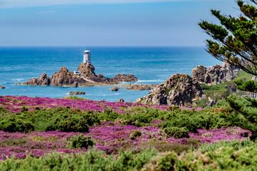 Coastal walk through heather meadows Corbiere Lighthouse Jersey, Channel Islands
