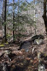 Small mountain stream in Ouachita National Forest Arkansas