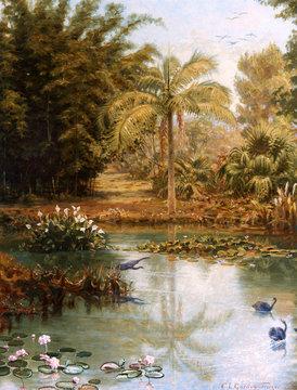 Black Swans, Charles E Gordon Frazer