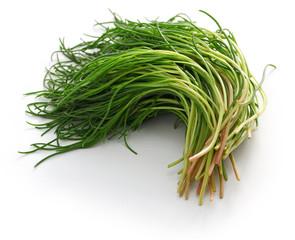 fresh agretti, italian vegetable isolated on white background