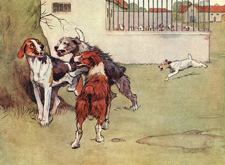 Illustration, Peter, the Fox Terrier, with Three Big Dogs