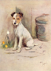Frontispiece Illustration, Peter, the Fox Terrier
