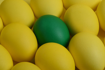 One green painted Easter egg lies between the yellow eggs. Happy Easter holiday card or banner.