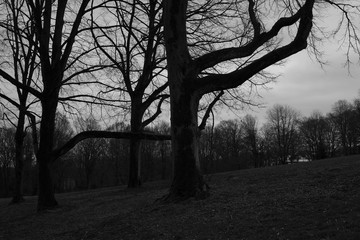 Trees and branches in greyscale