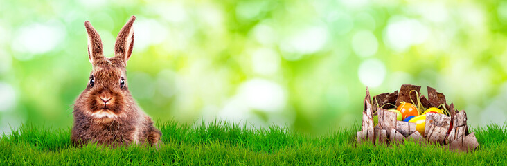 easter bunny on green nature background